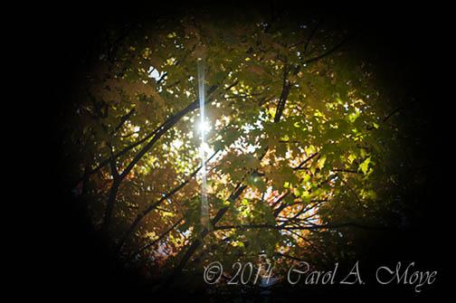 Ricky's fav-sunrays leaves